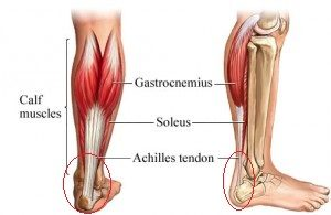 Commonly injured structures of the foot from running #5 Tendons.